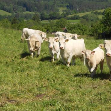 Zemědělské obchodní družstvo Sepekov